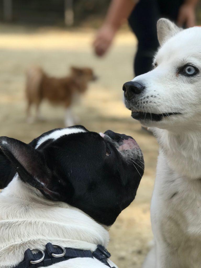 犬に恋する5秒前