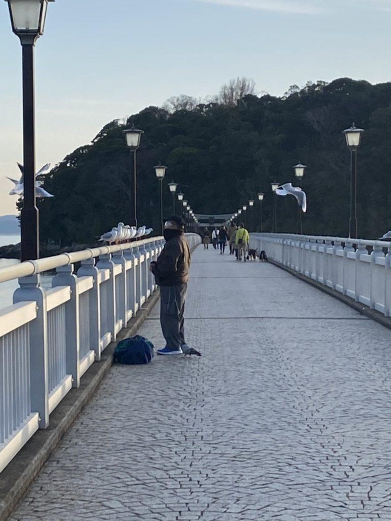 蒲郡 竹島 八百富神社 カモメ